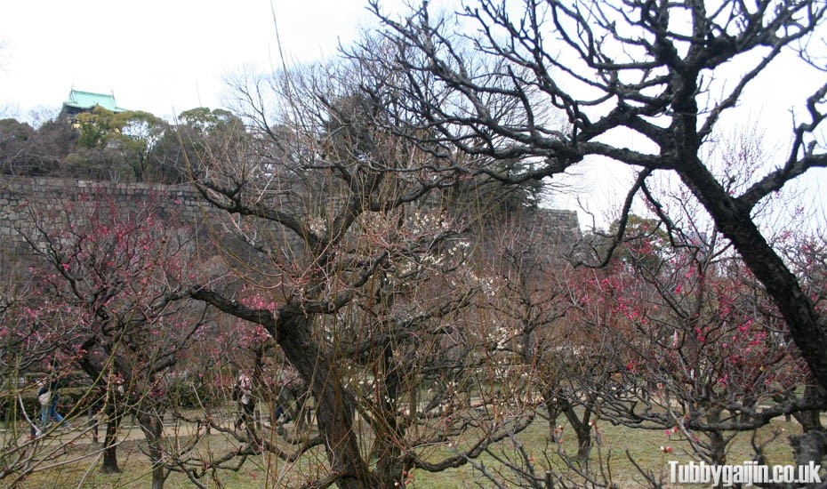 Osaka Castle Plum Orchard